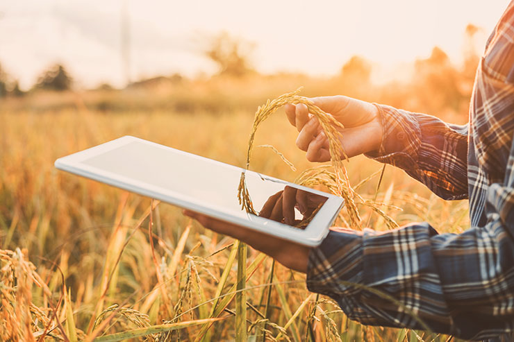 Farmer holding tablet computer with IoT data.
